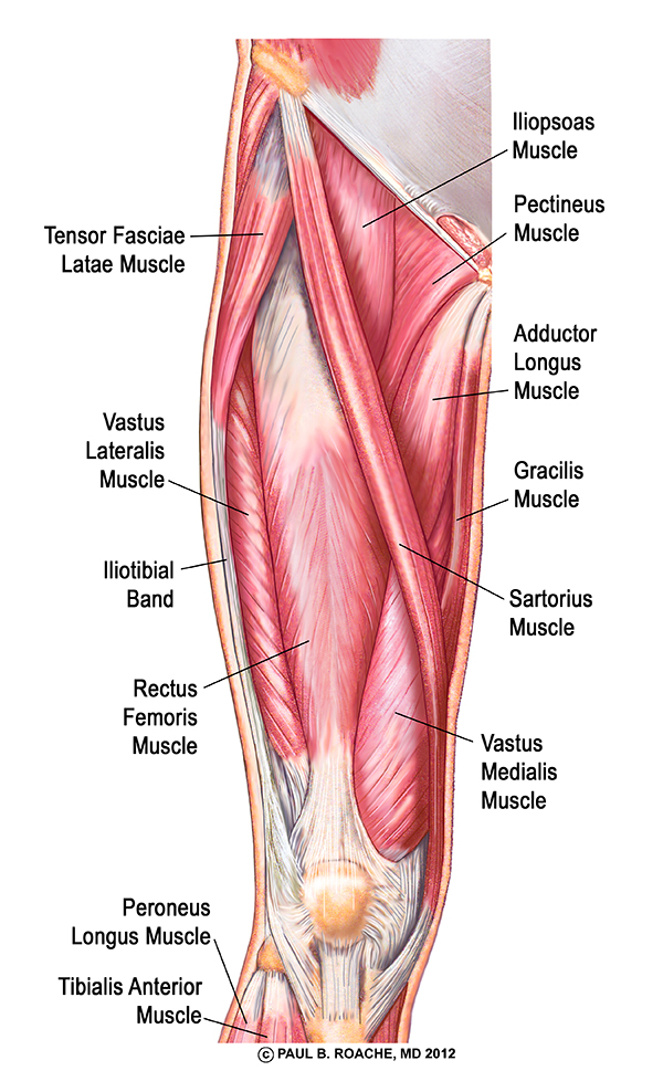 Anatomy Of Yoga Dvd Gallery Human Body Anatomy