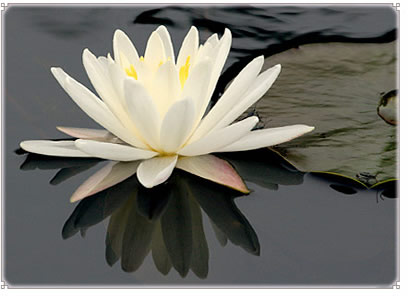 A Lesson From the Lotus