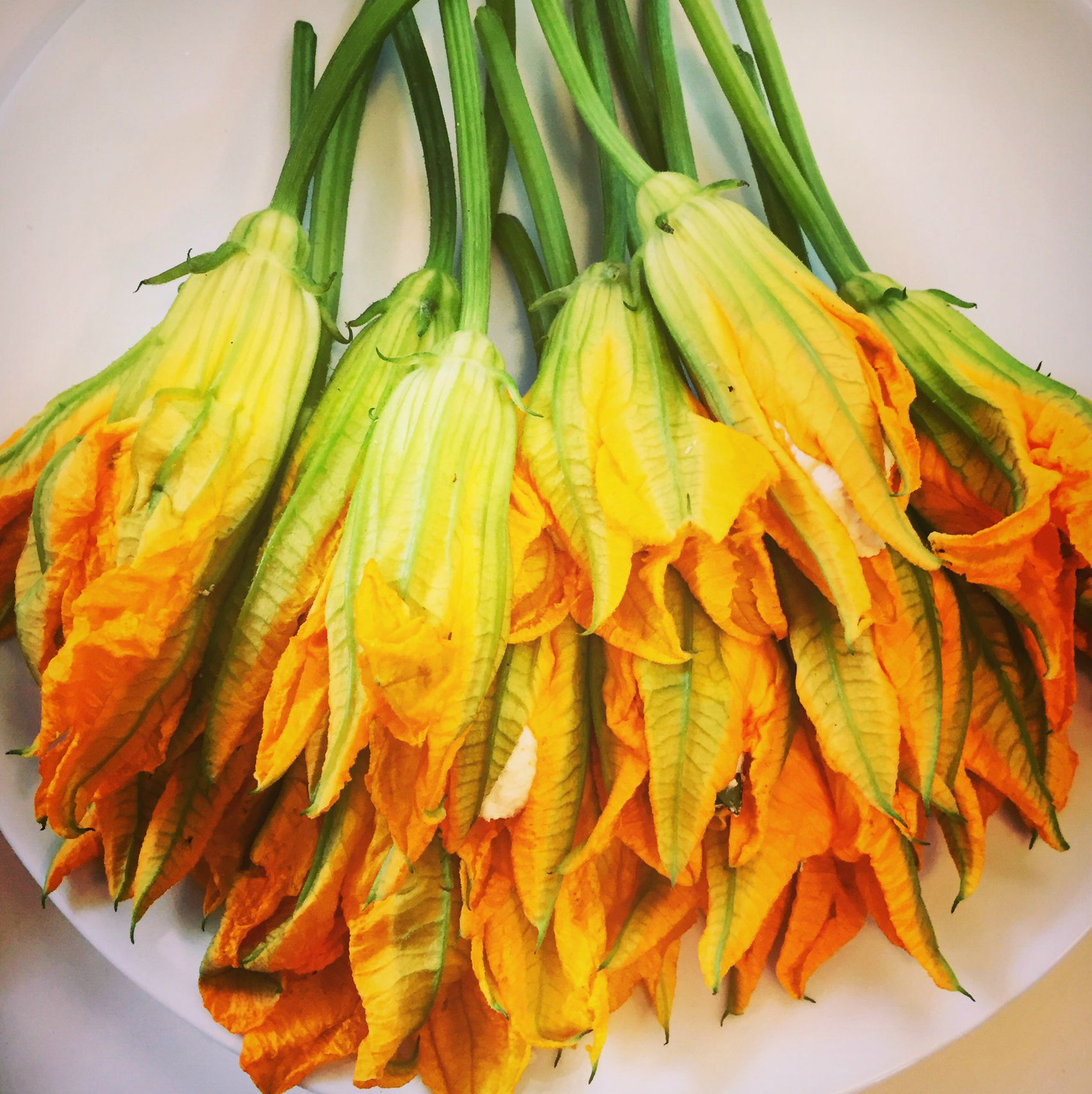 Cashew Cheese Stuffed Squash Blossoms